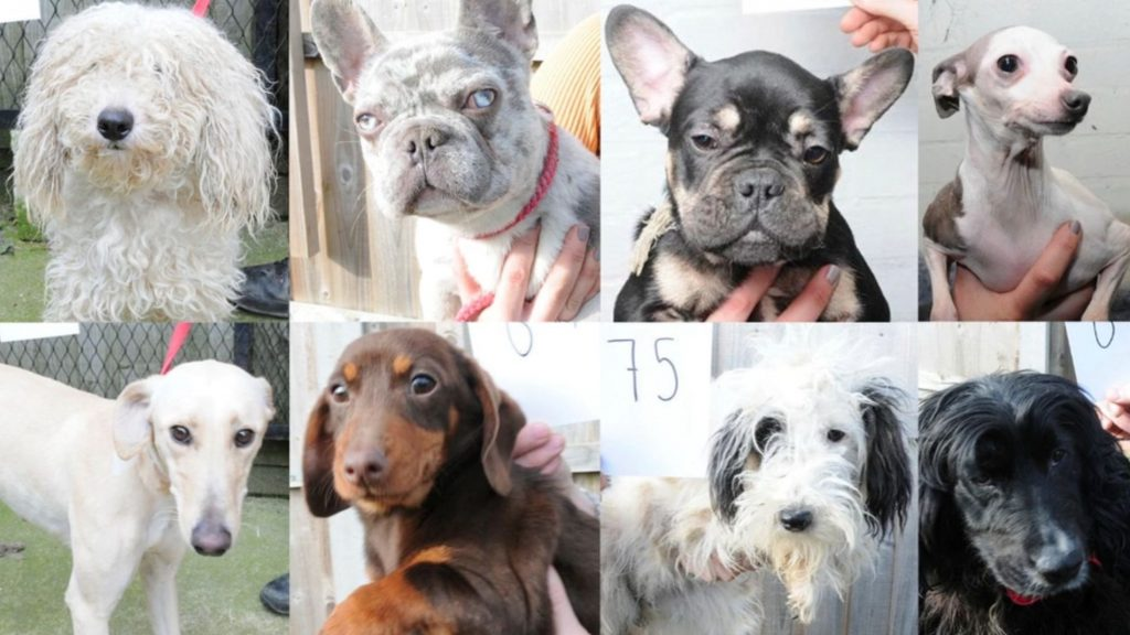 Police release images of 48 stolen dogs in an effort to find their owners