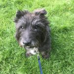 Billy Needs a Forever Home