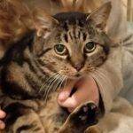 Cat stolen from outside a home in Bury St Edmunds